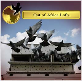 PLEASE NOTE: All pigeons purchased are to be collected at our premises in Parys on the banks of the Vaal River, or at our Pets shop in Springs for the Gauteng Area. All other provinces shall be shipped to different airport destinations by us.
